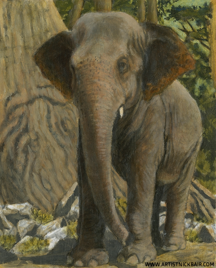 Indian Elephant - Oil Study