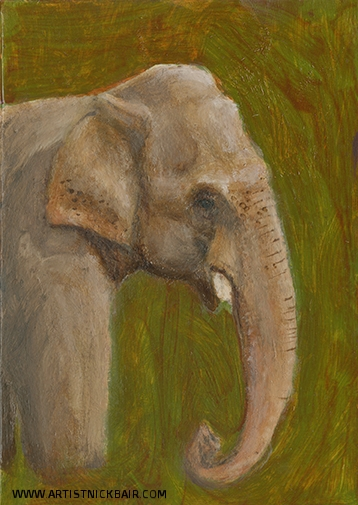 Indian Elephant Profile