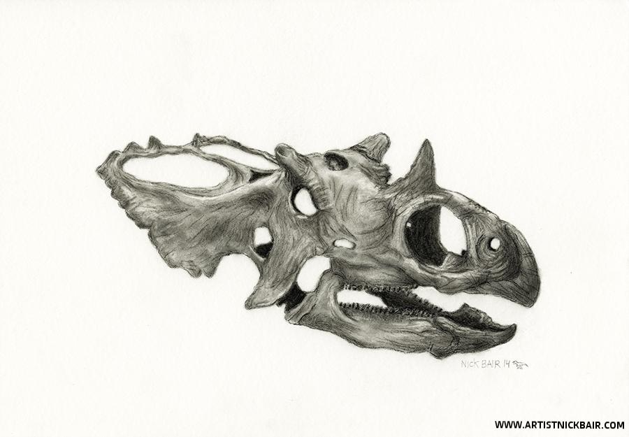 Utahceratops Skull