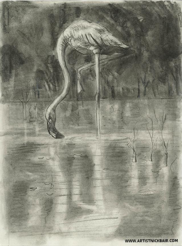 Flamingo Grazing