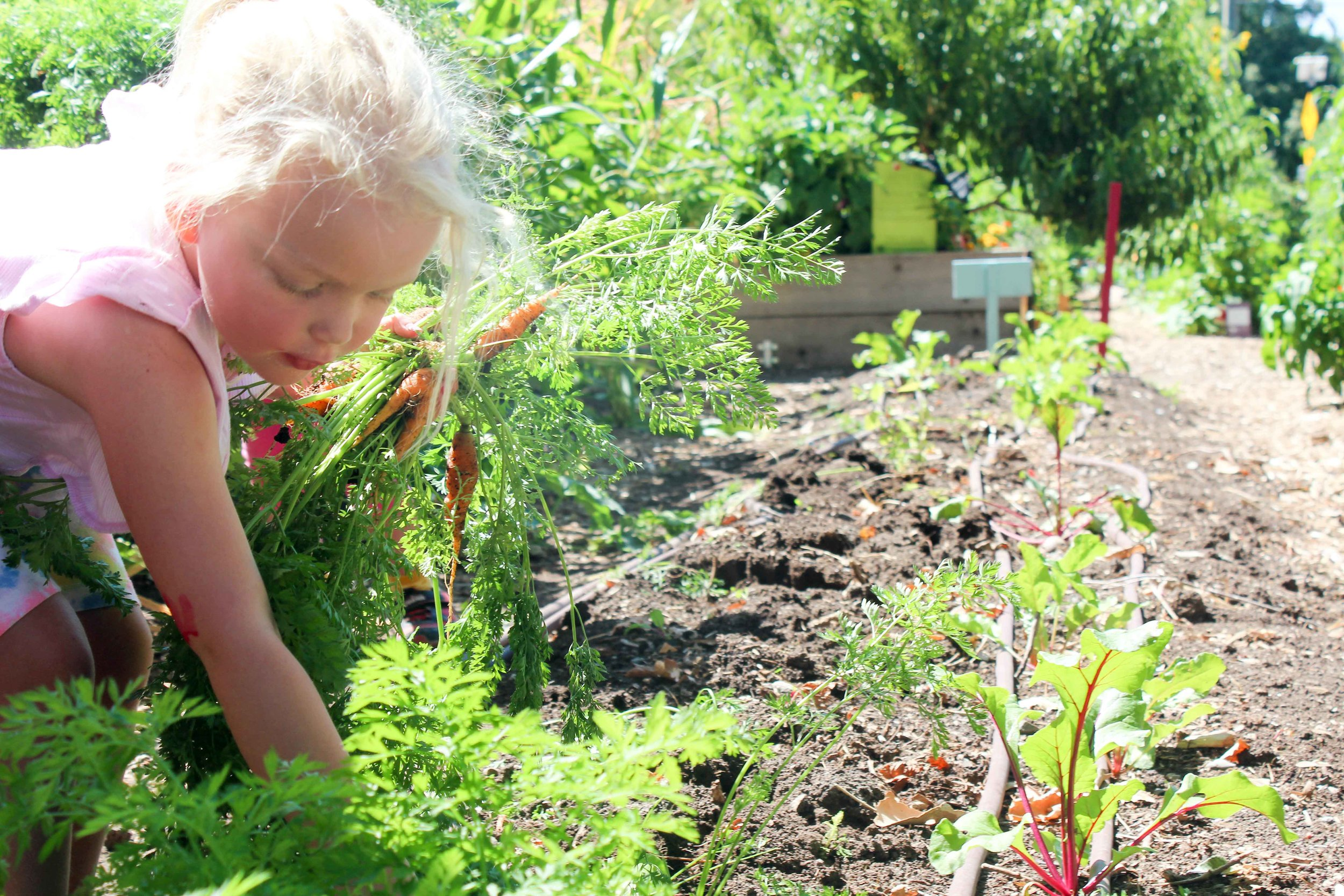 Photo courtesy of Wasatch community gardens