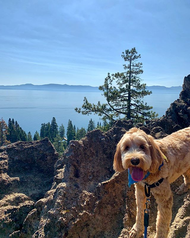 I could get used to the Tahoe life 🌲✨🐾