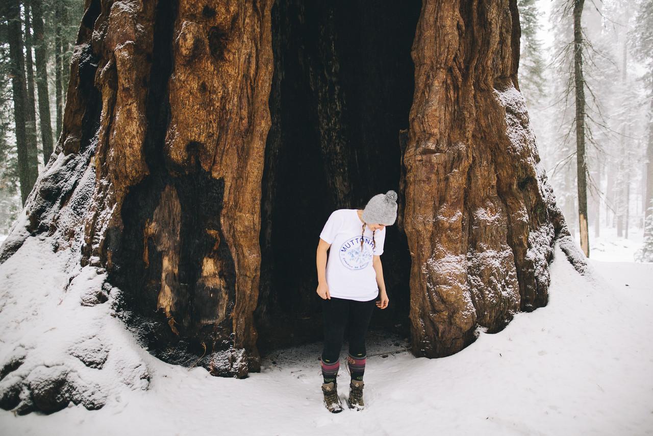 DecemberSequoiaSnow170-X2.jpg