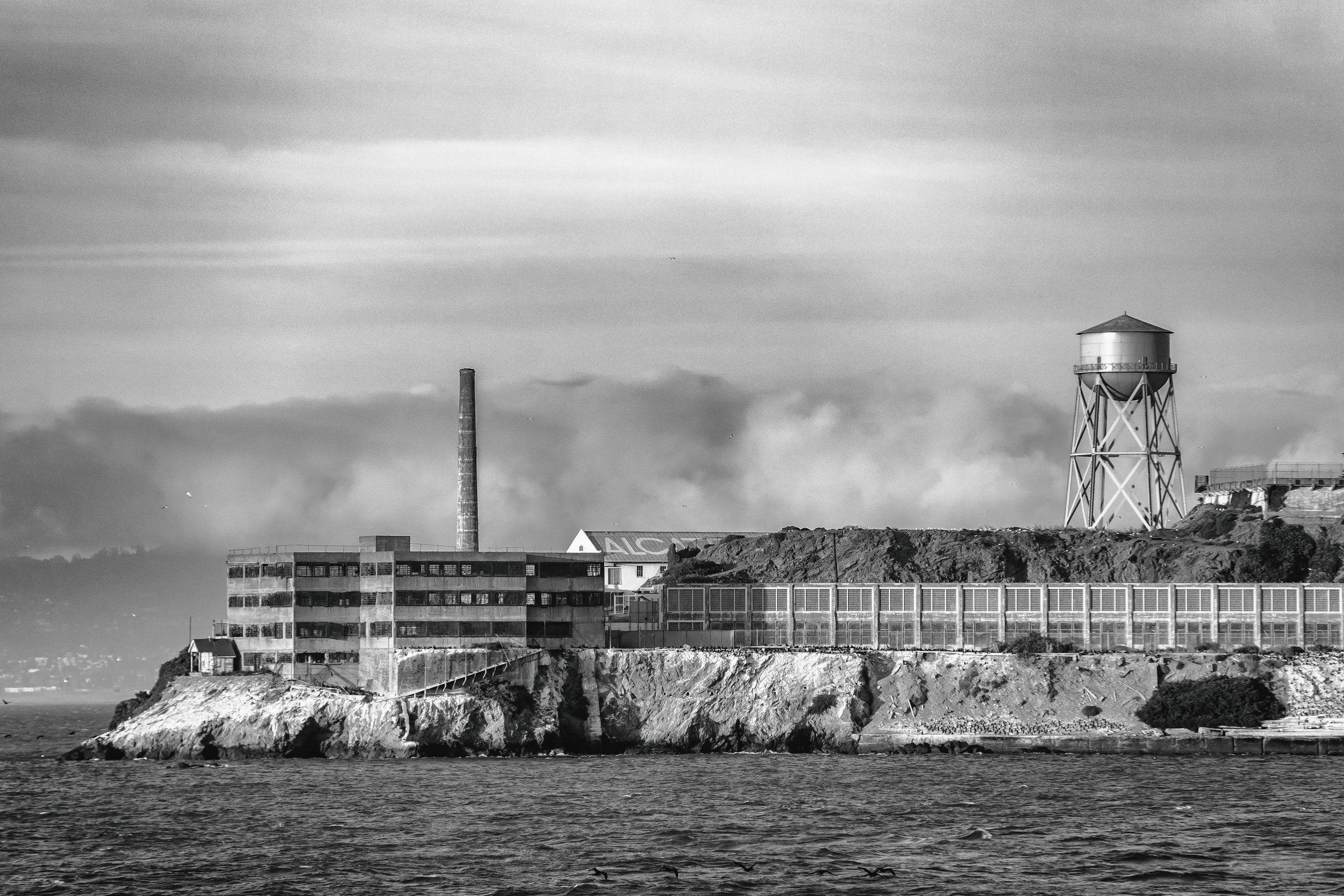 Alcatraz Island. Home to thousands of nesting seabirds that are studied by Farallon Institute scientists to understand how climate and food resources influence their populations.