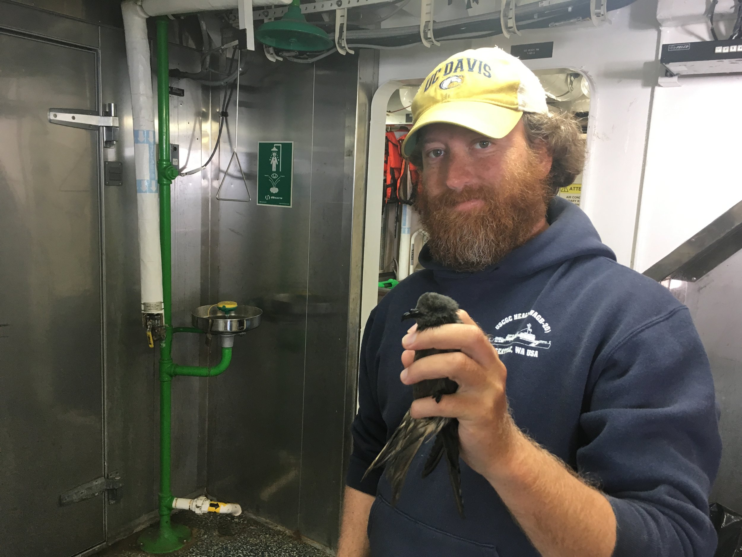 Brian Hoover, with a petrel. Brian is currently on a 30-day research cruise studying seabirds and marine mammals in the California Current.