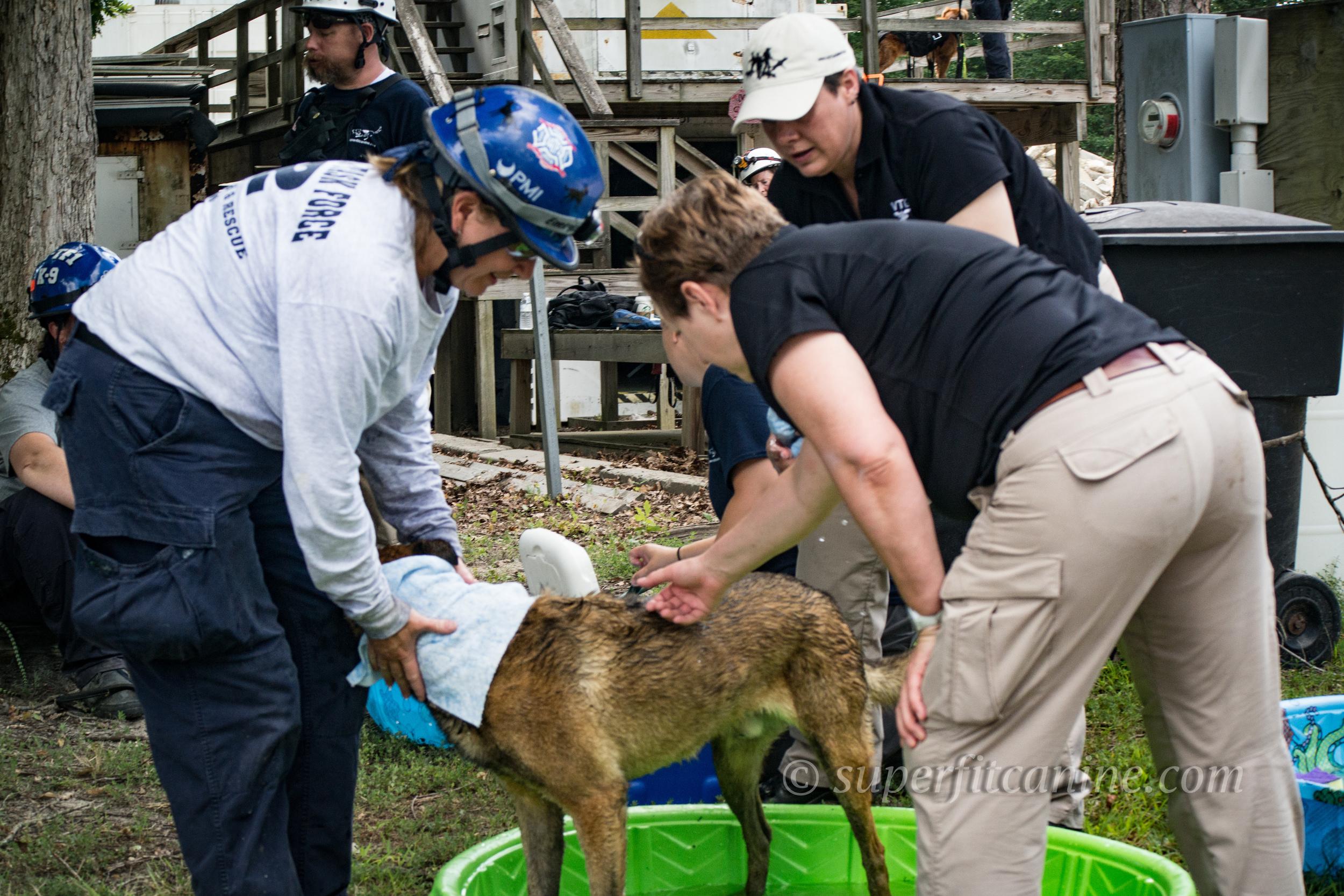 Veterinary Support by VTG