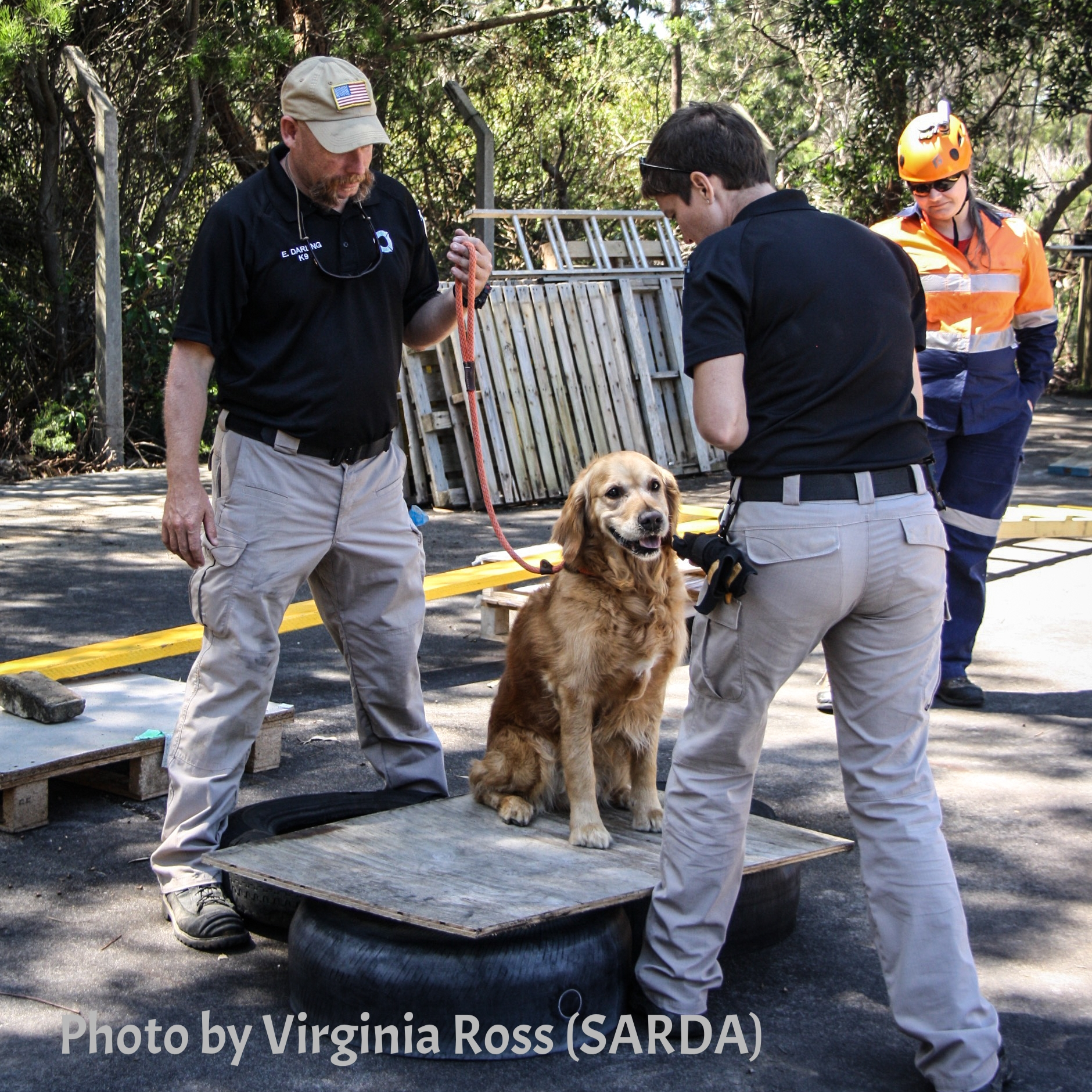 Tracy Darling demonstrates exercises to help keep working dogs fit with 5 month old K9 Will (SARDA)