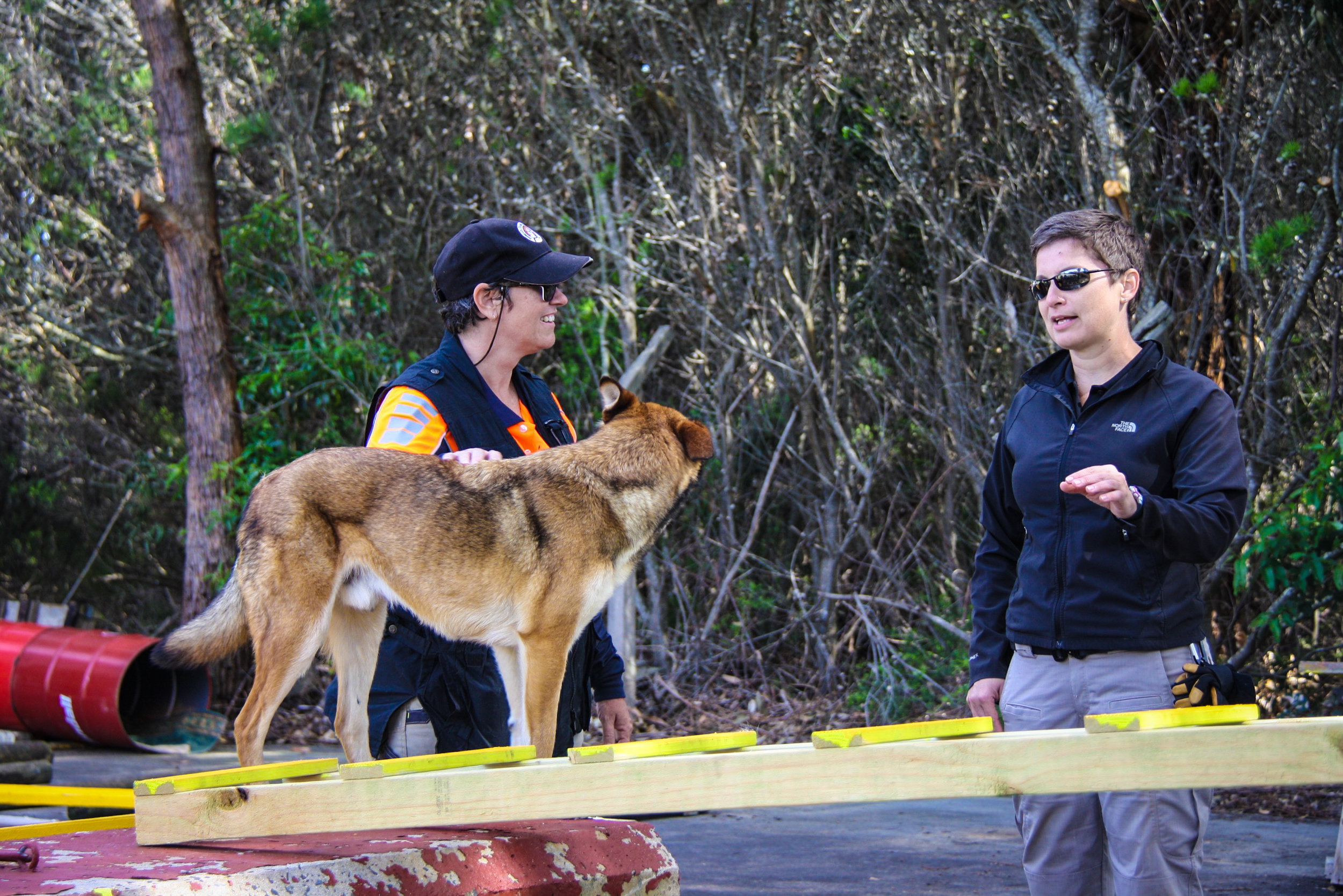 Instructor Tracy Darling discusses ways to increase the impact of ladder training with handler Adele Jago (K9 Boof: Search Dogs Sydney)