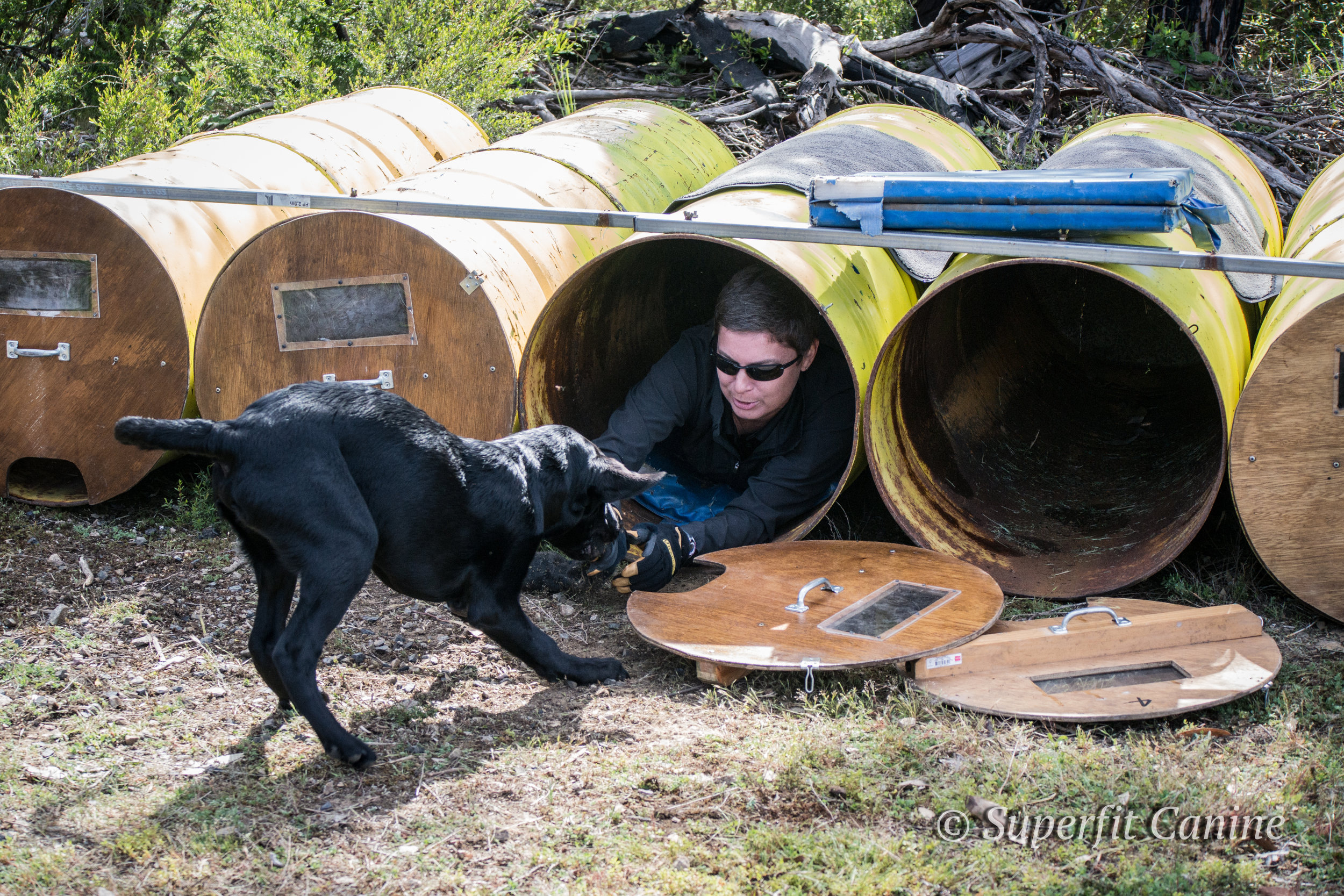 """Tracy demonstrates how to be a good """"victim"""" during the workshop with K9 Ari (SARDA)"""