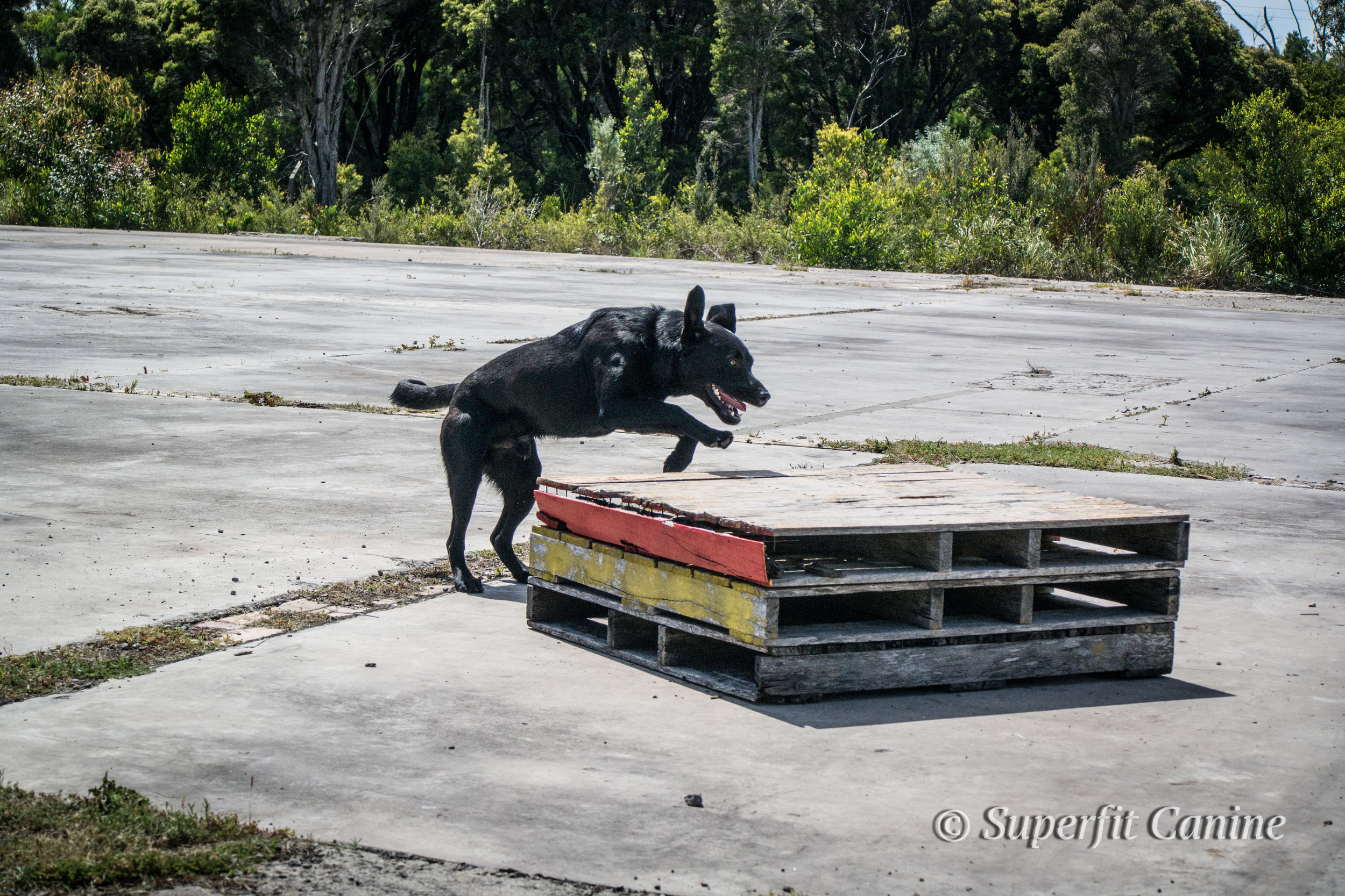 K9 Obie (SARDA) during the Direction and Control portion of the workshop