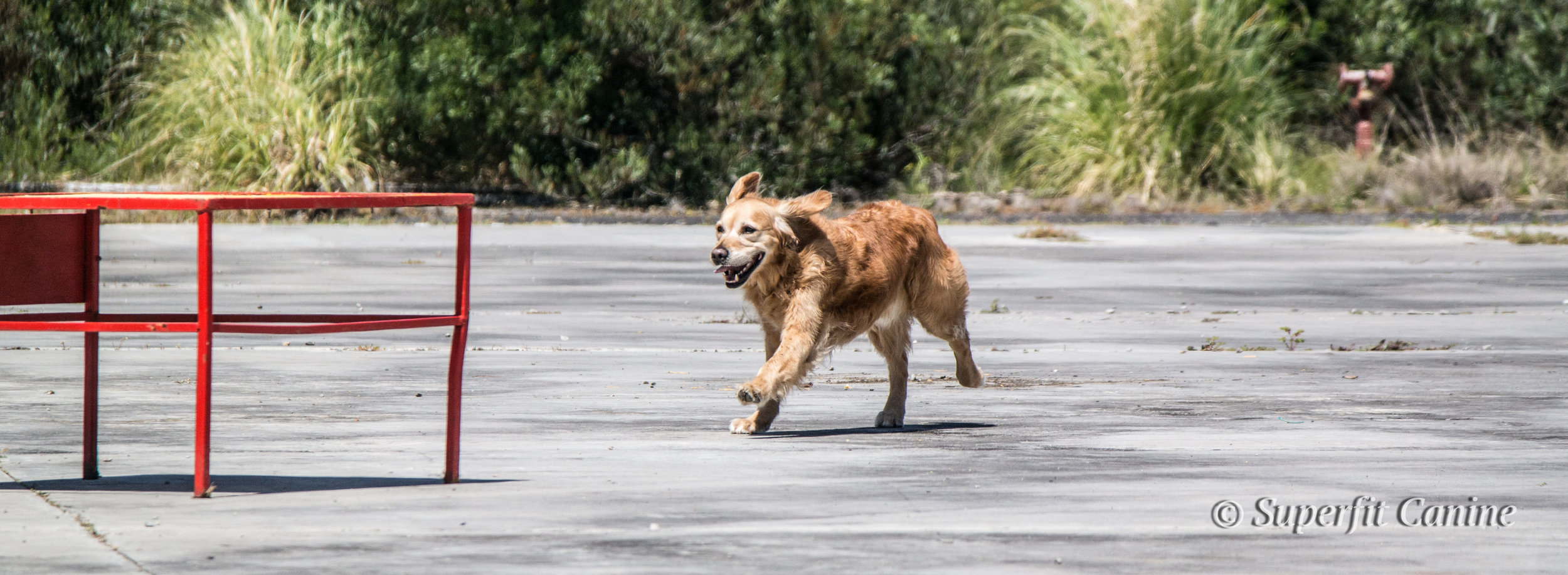 K9 Will (SARDA) during the Direction and Control portion of the workshop