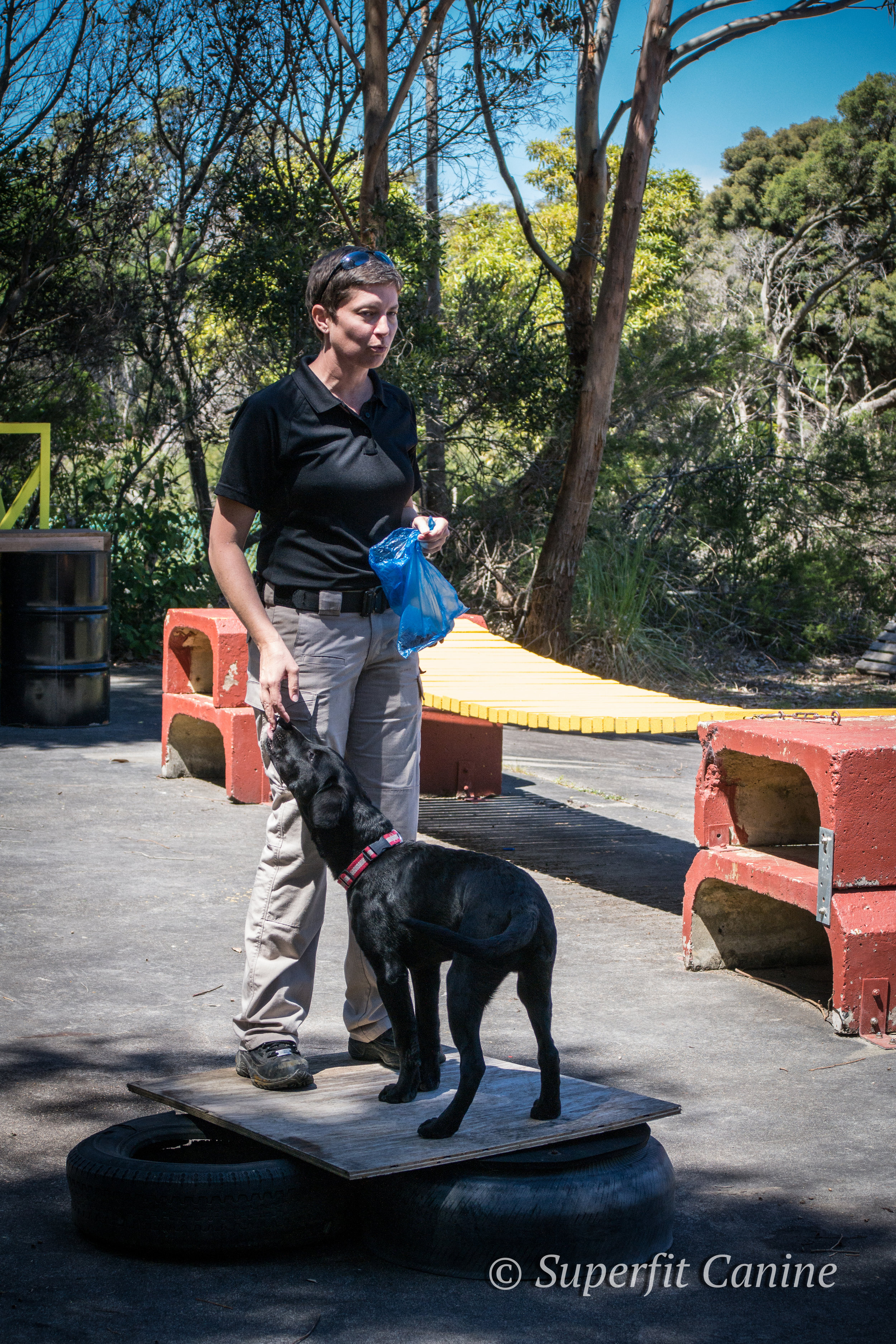 Instructor Tracy Darling demonstrate weight shifting exercises to build core strength in working dogs with K9 Ari (SARDA)