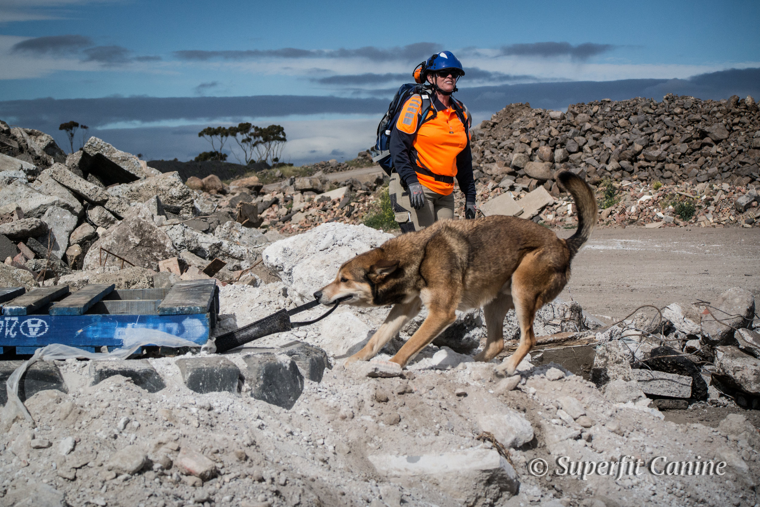 K9 Boof (Search Dogs Sydney) is rewarded for a find with handler Adele Jago
