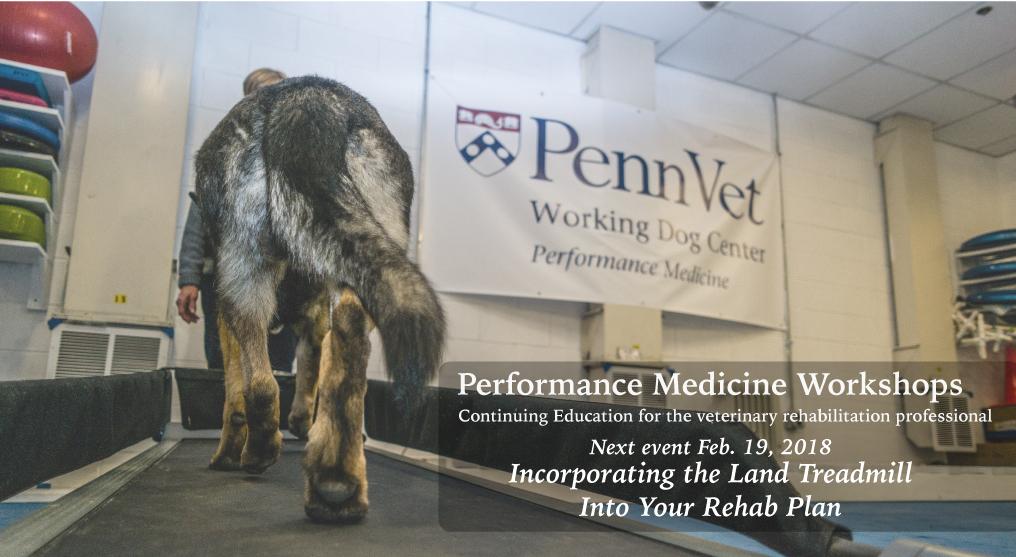 Performance-Medicine-Workshop-Treadmill.jpg