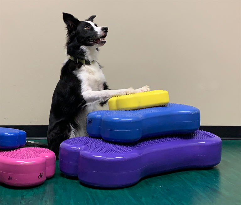 """(Compare to Regular K9FITbone *23""""x10"""" and Giant K9FITbone *35.5″ x 15.7″ *Approx sizes )"""