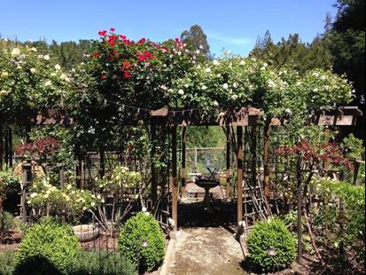 Randall's Rose Garden