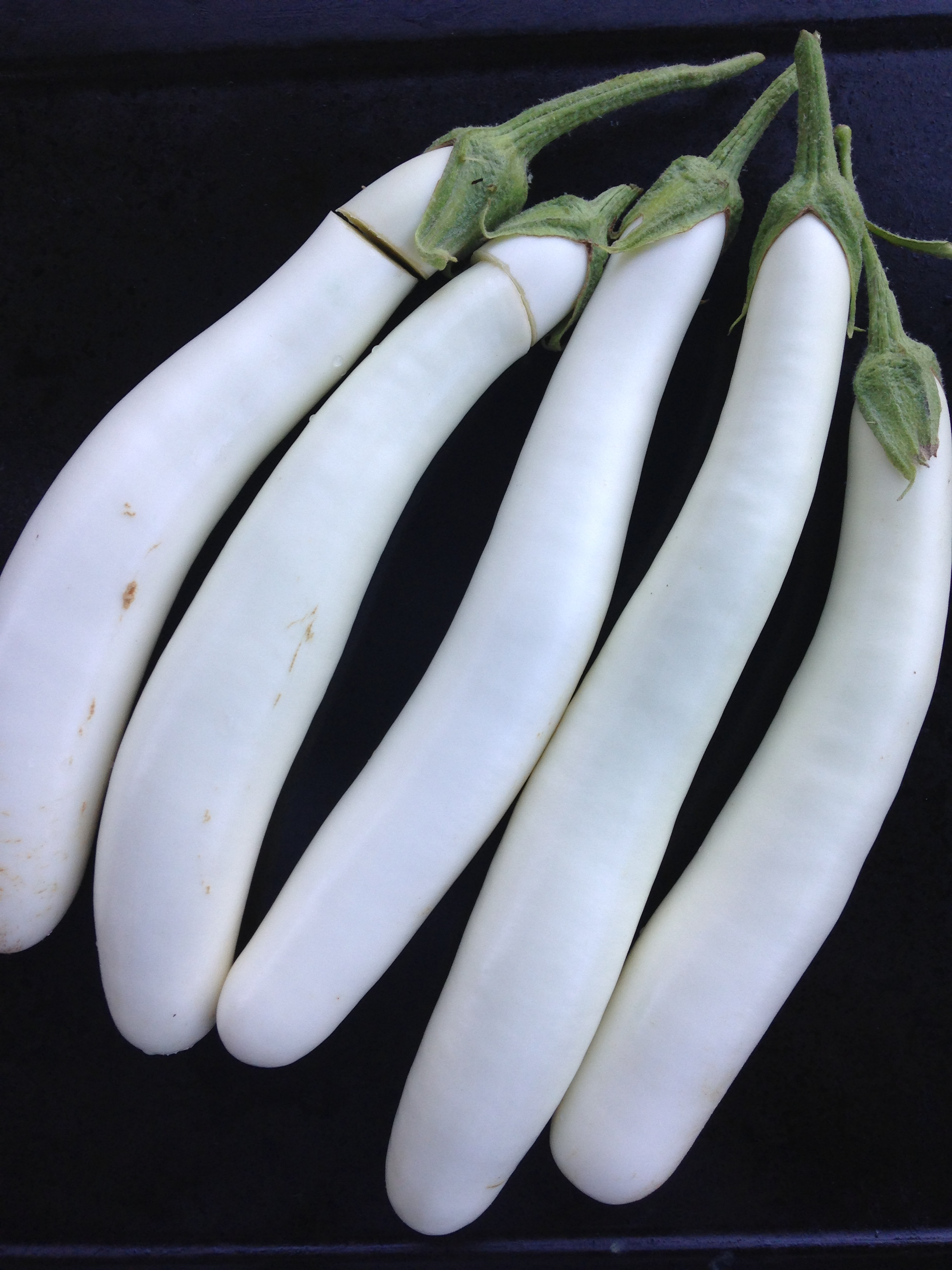 Full grown 'Gretel' eggplants!