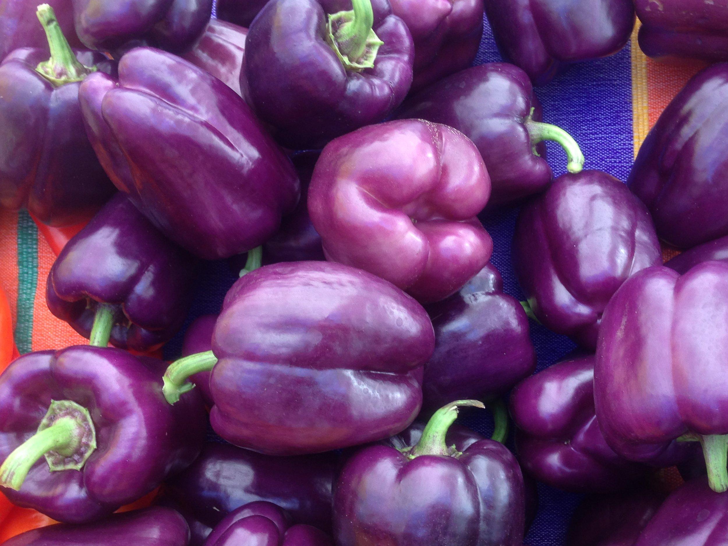 Islander Peppers from Randall's garden.