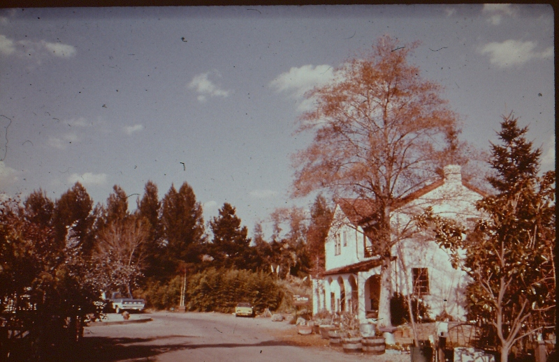 Orchard (5) (800x519).jpg