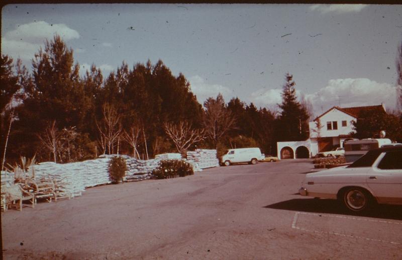 Orchard (4) (800x519).jpg