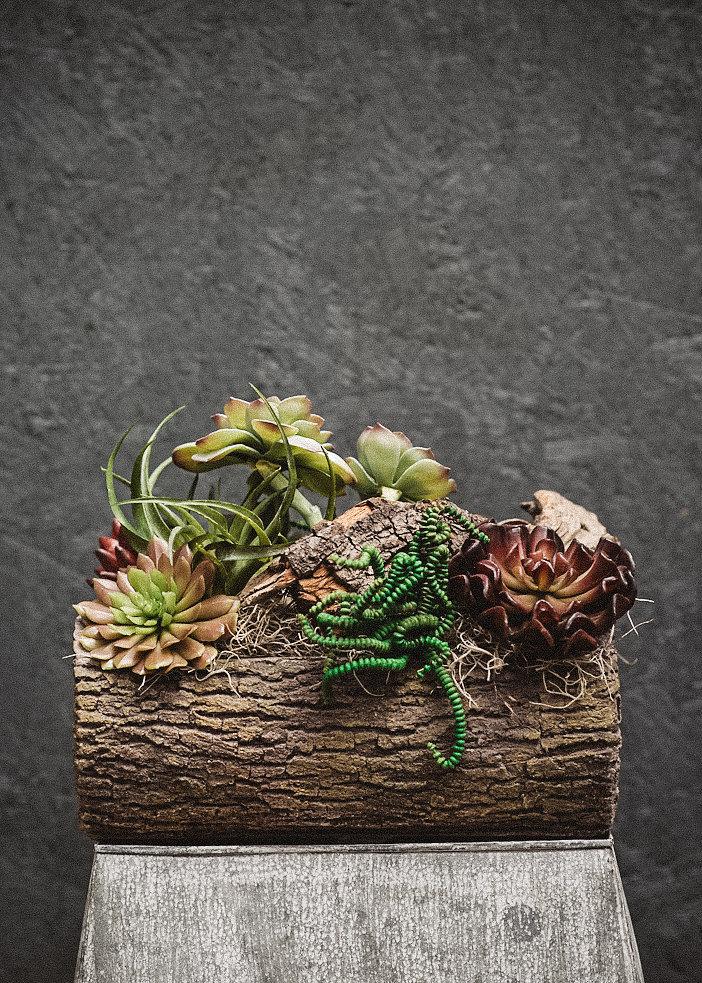 succulentlog-1.jpg