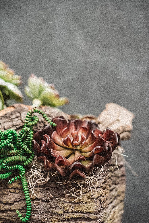 succulentlog-2.jpg
