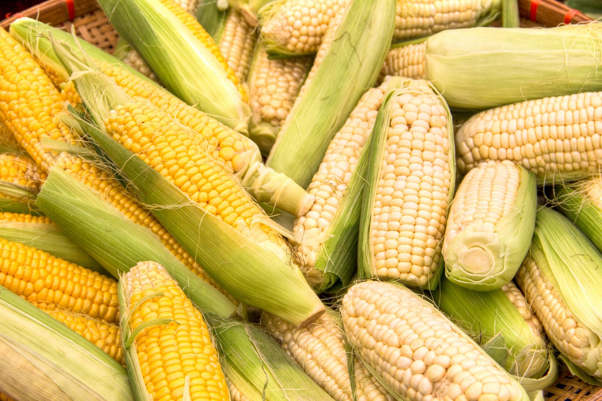 corn-on-the-cob-1509755892fme.jpg