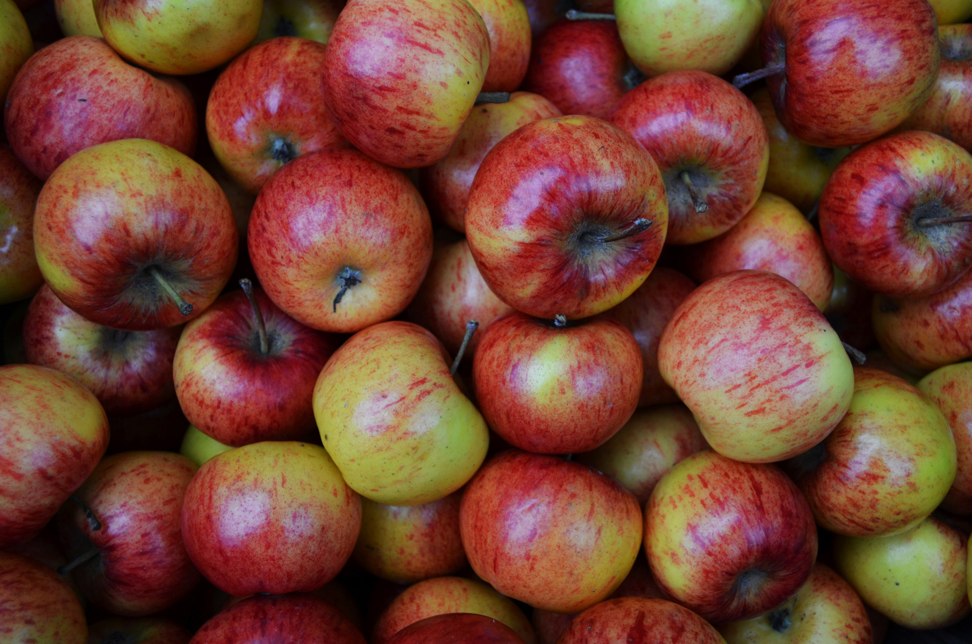 autumn-apples.jpg