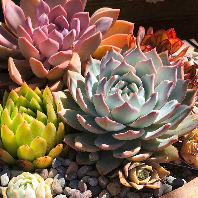 Succulents galore!