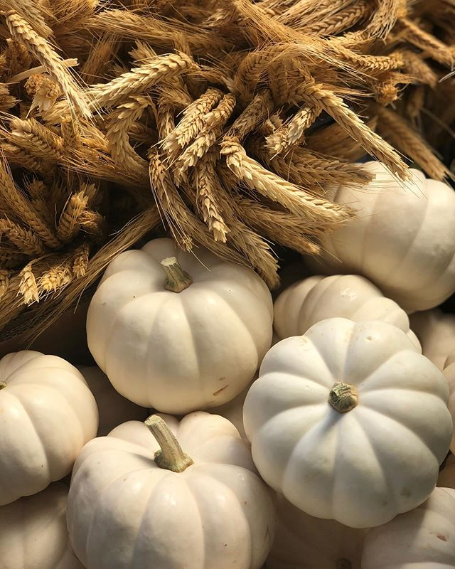 Mini pumpkins, gourds, corn, bundles of wheat are here! Fall is officially in the air 🍂🌾💛 📷 by @orchardnursery