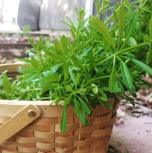 East Bay Herbals
