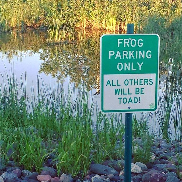 This is my kinda place! 🐸