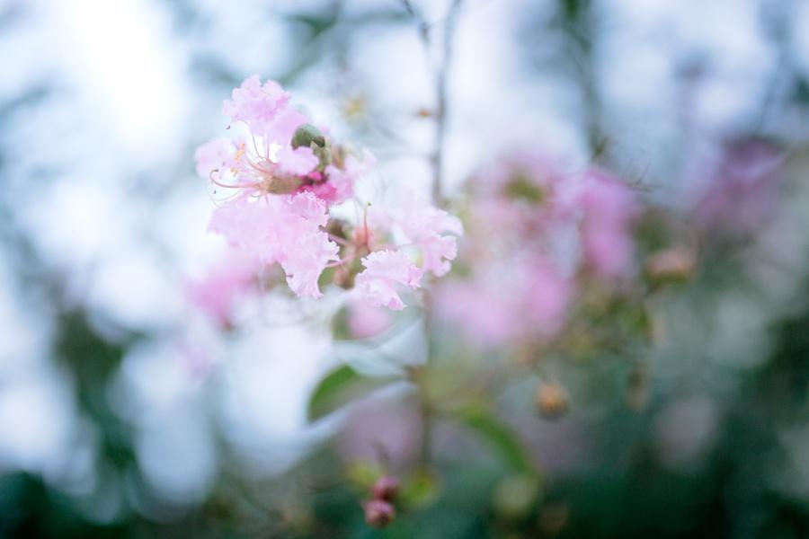 September 15: Pink.