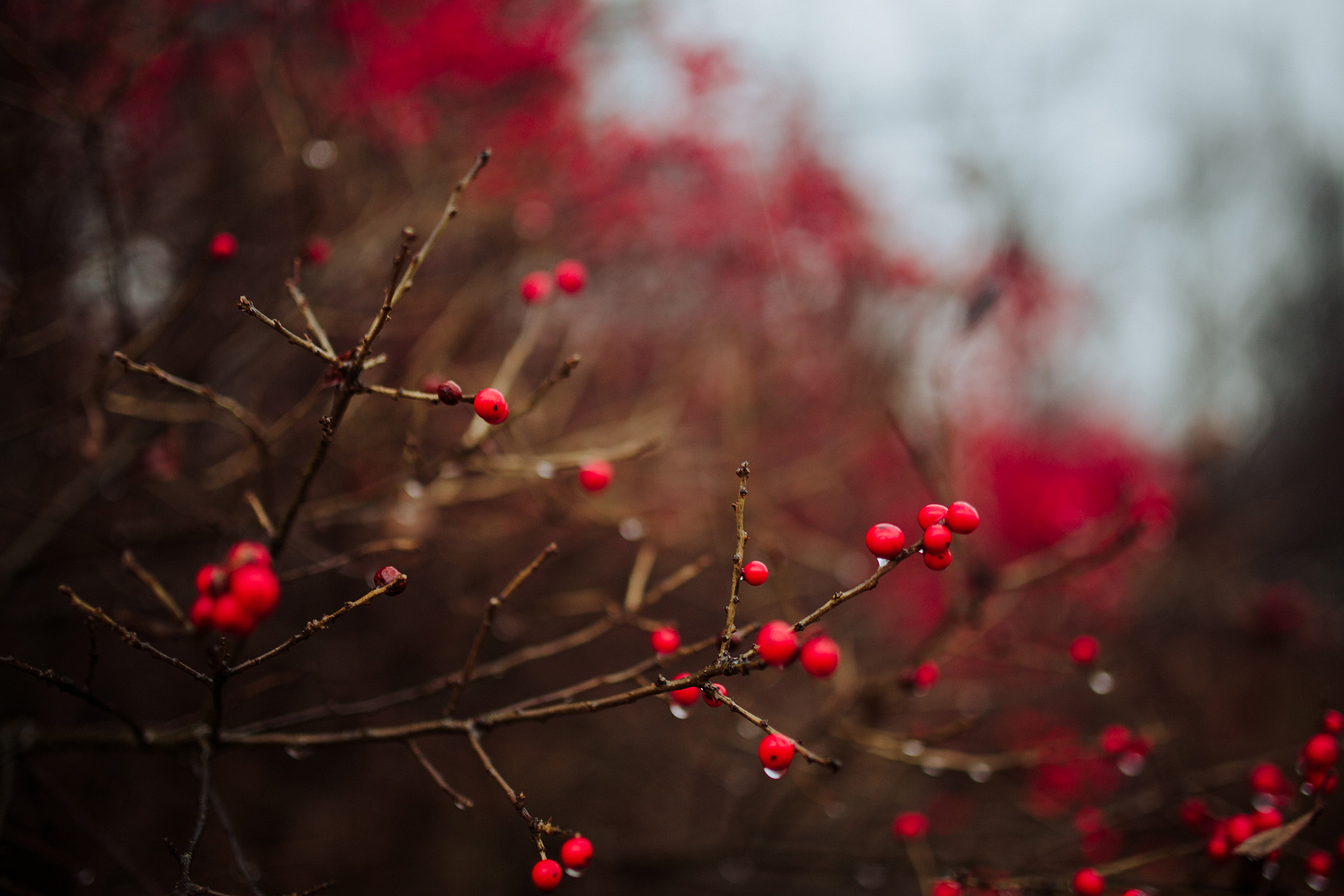 November 30: Red and rain and Connecticut.
