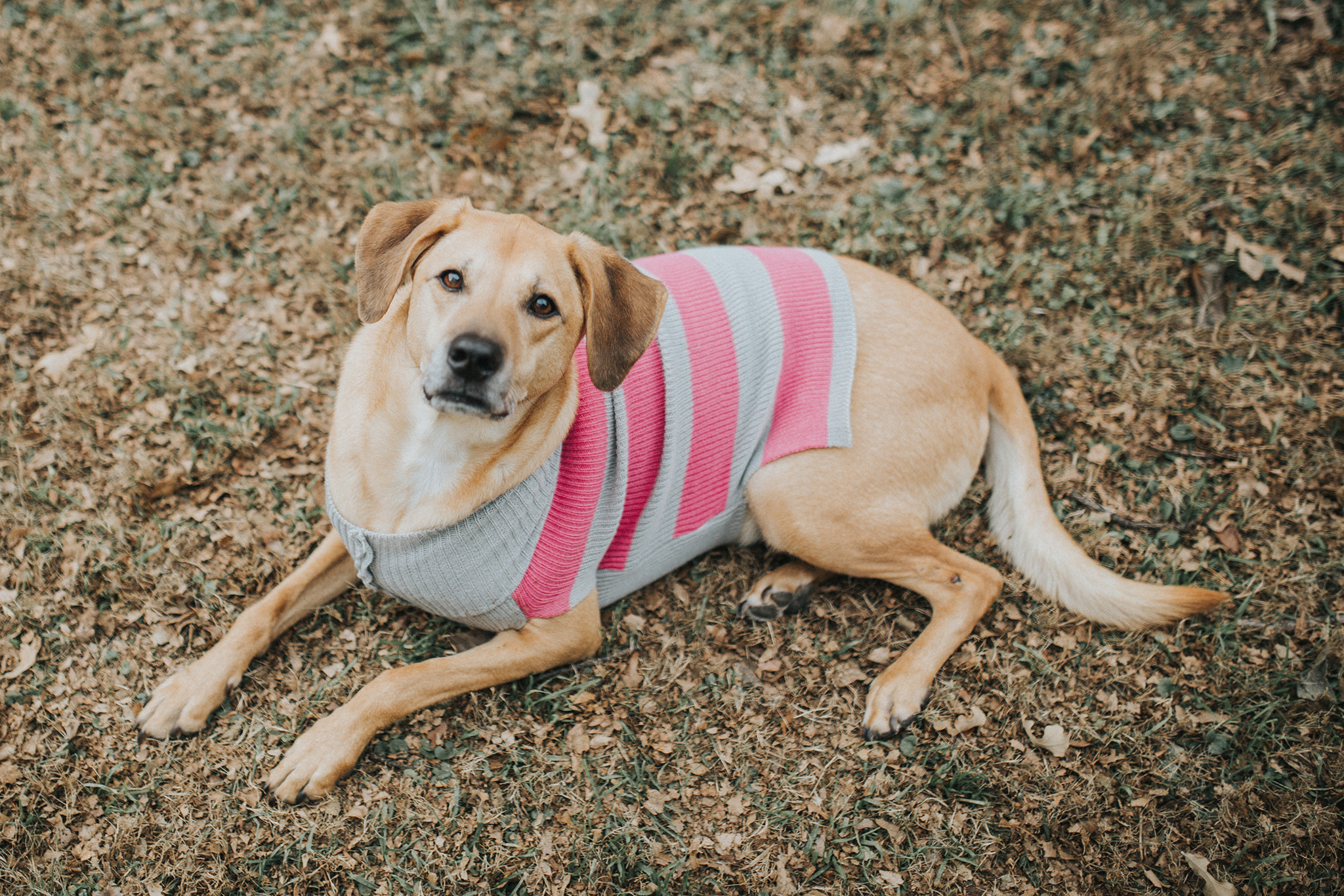 December 27: It was cold for all of 30 seconds, so of course Darby needed to sport a sweater.