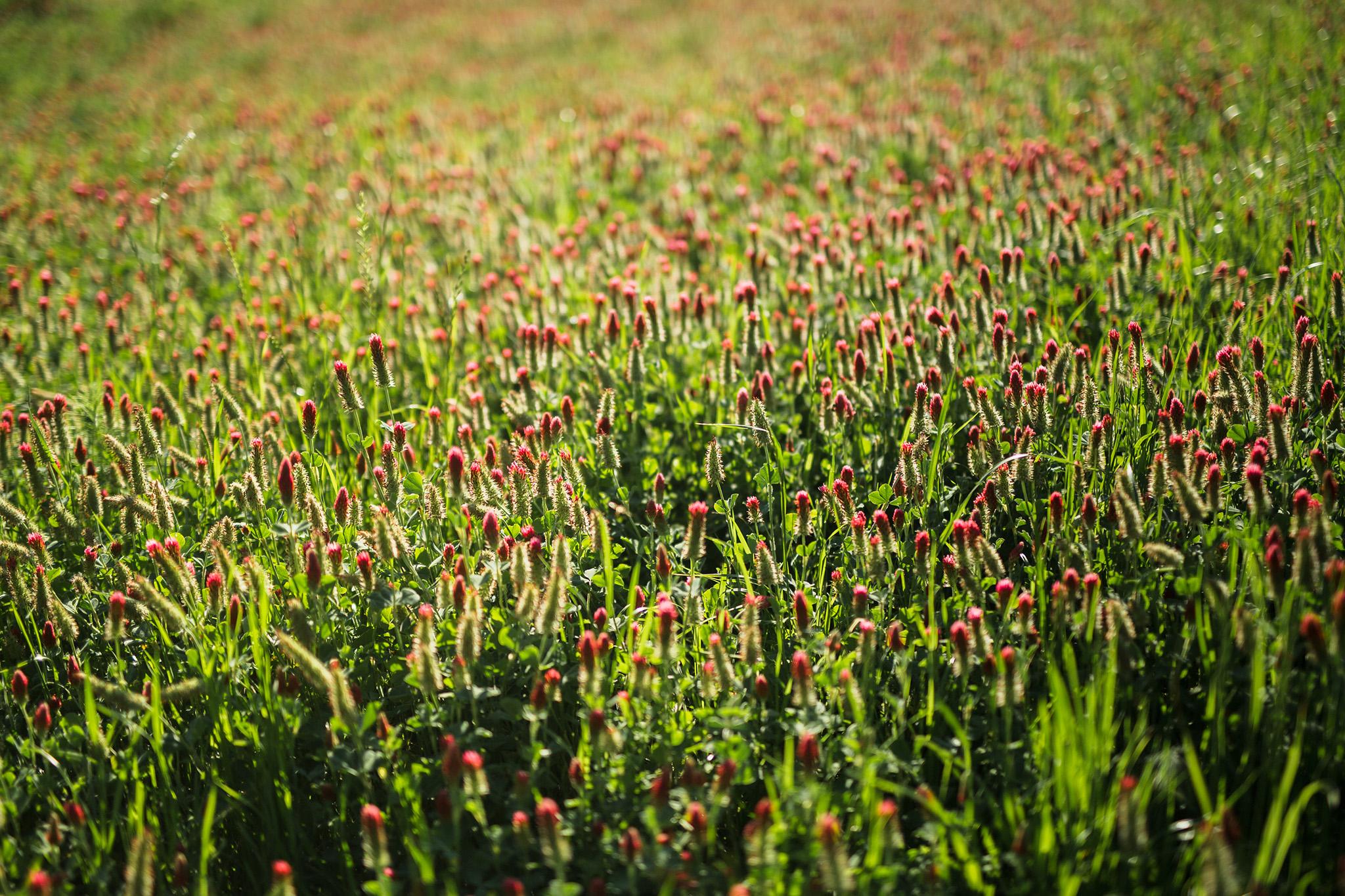 April 3: Texas wildflowers.