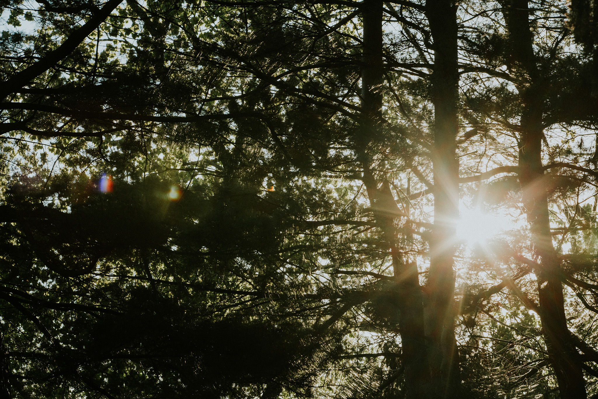 May 11: I see this light through the trees every night after work.