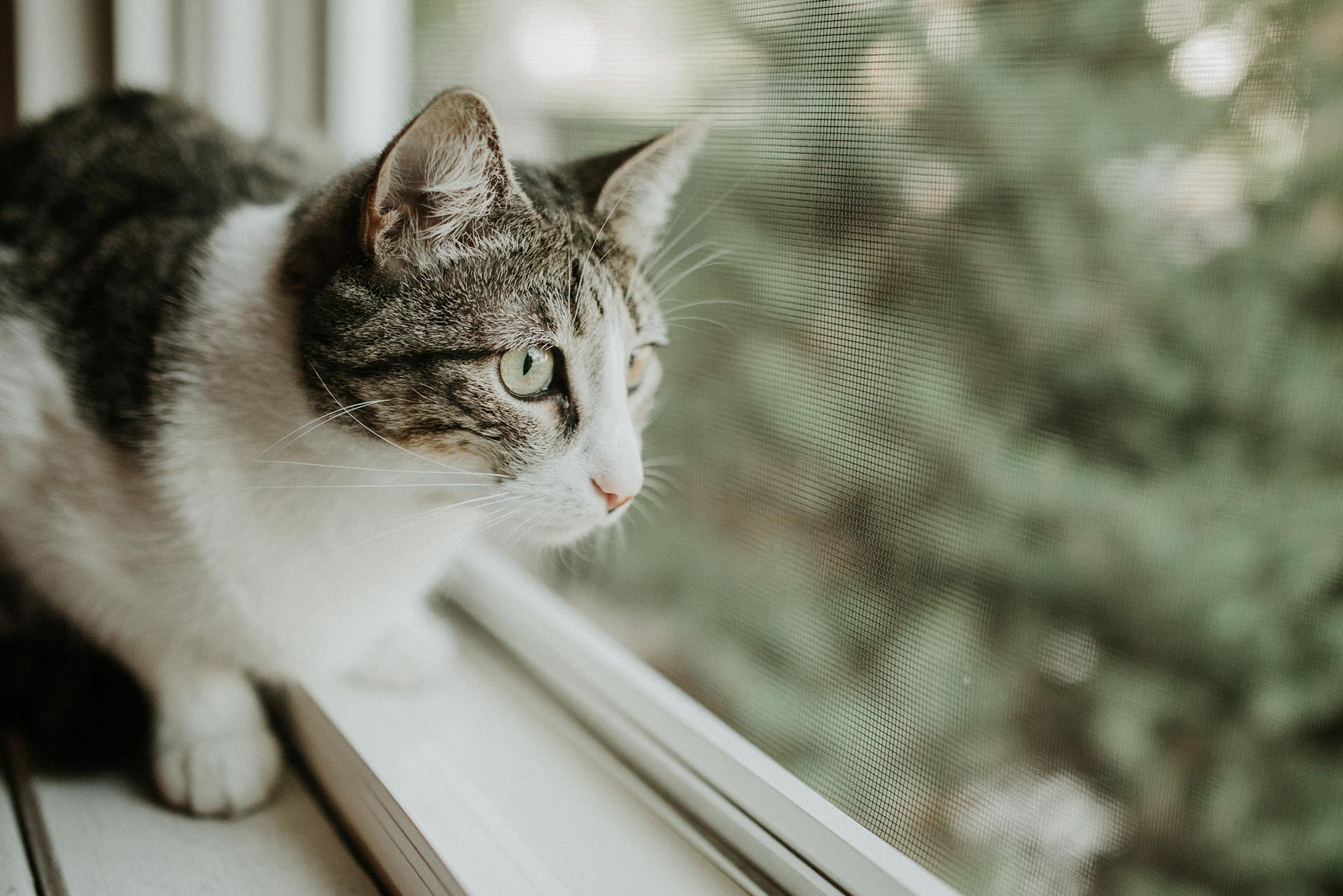 July 26: Open window bird song trance.