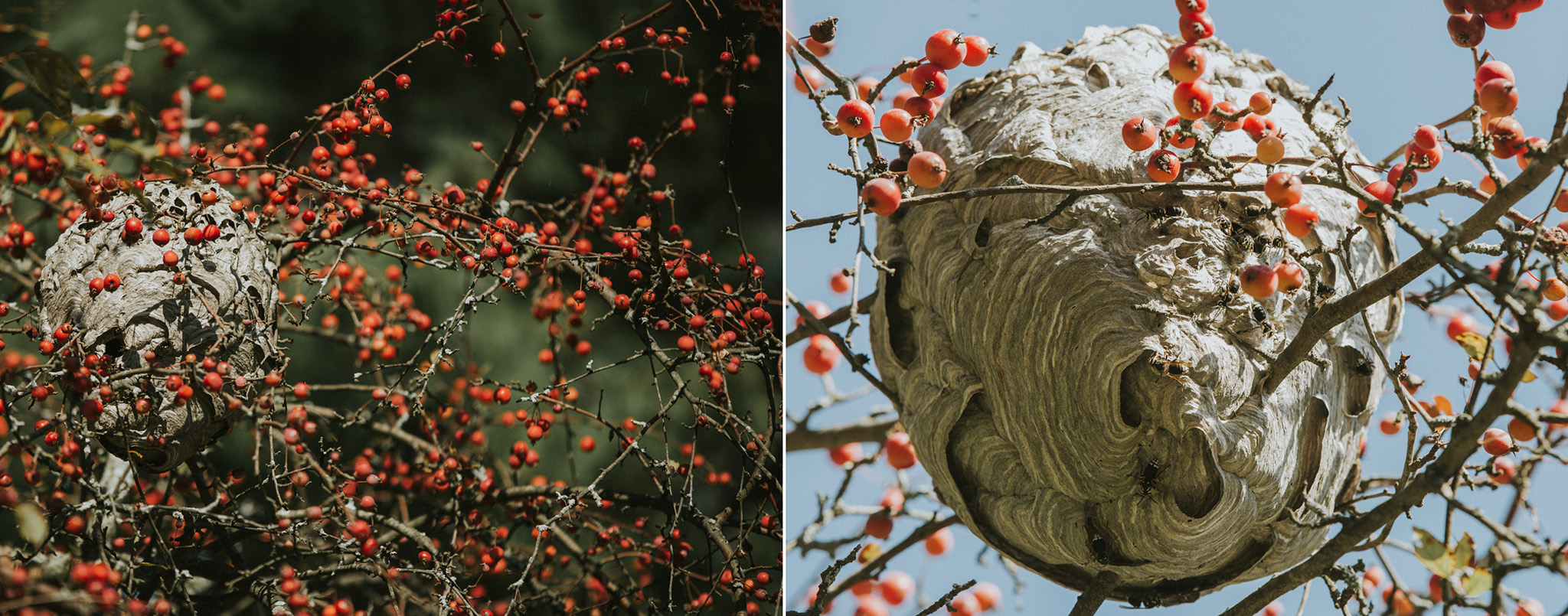 September 17: The hornet's nest.