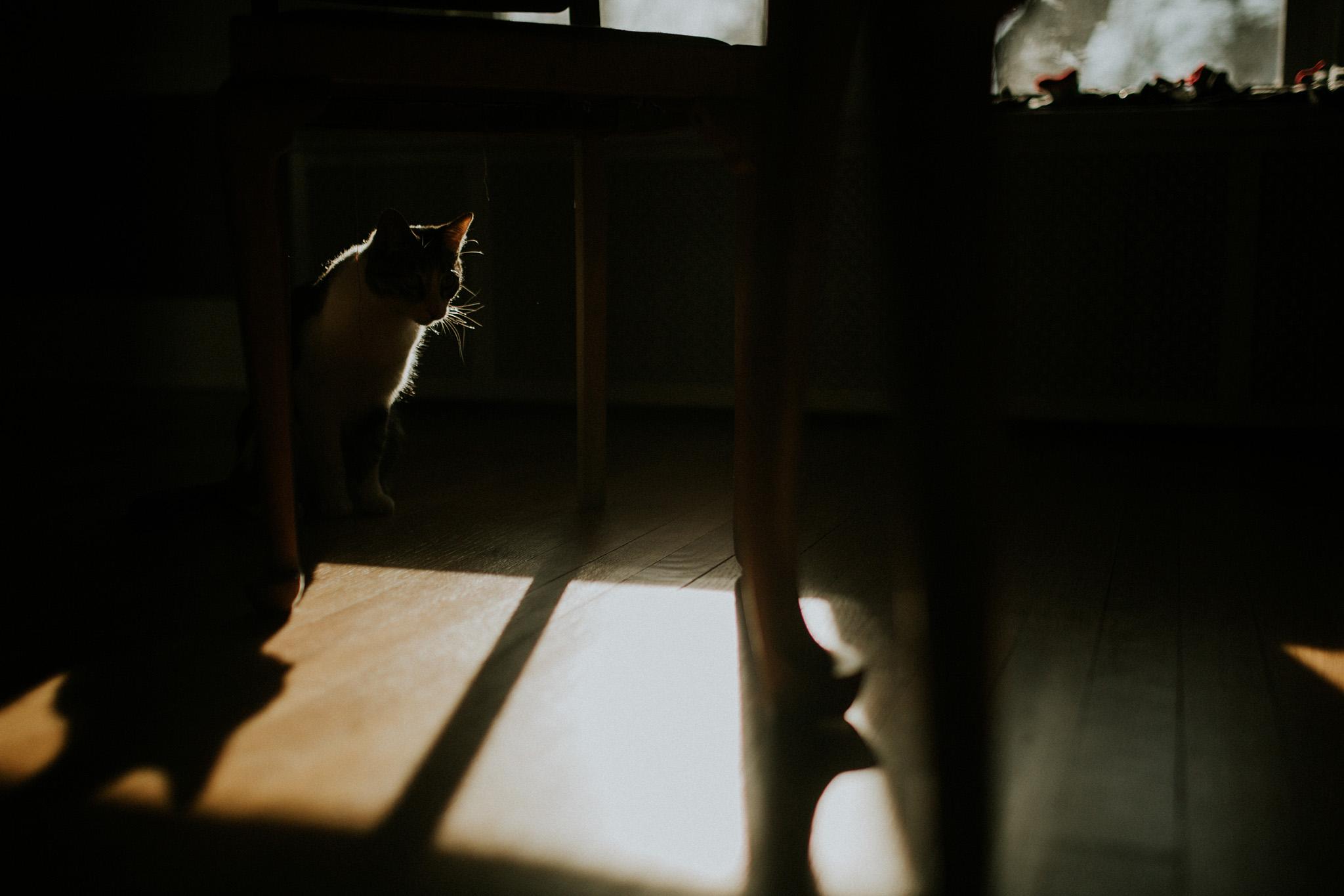 January 27: Caturday shadow play.