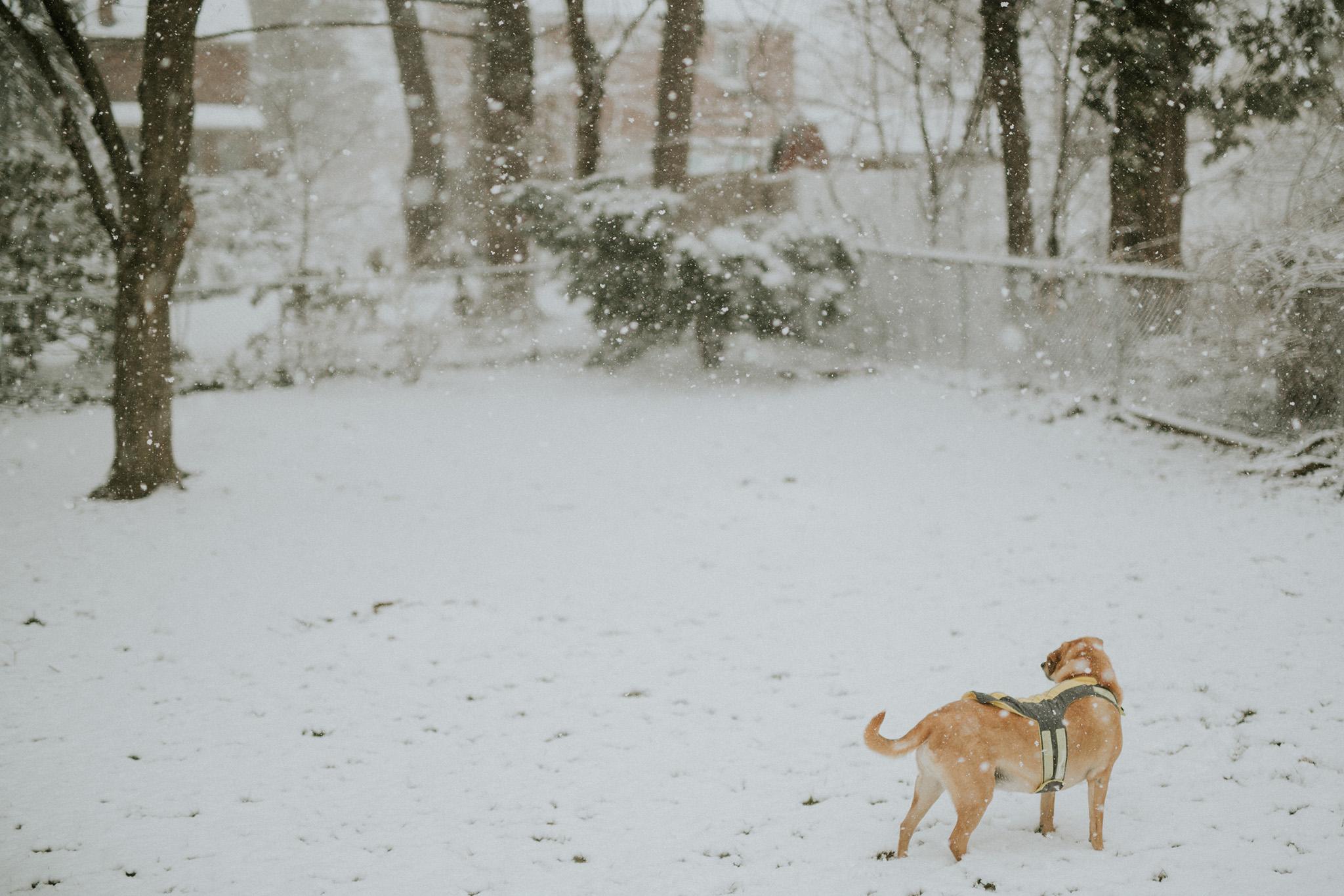 March 13: Hates rain; loves snow.