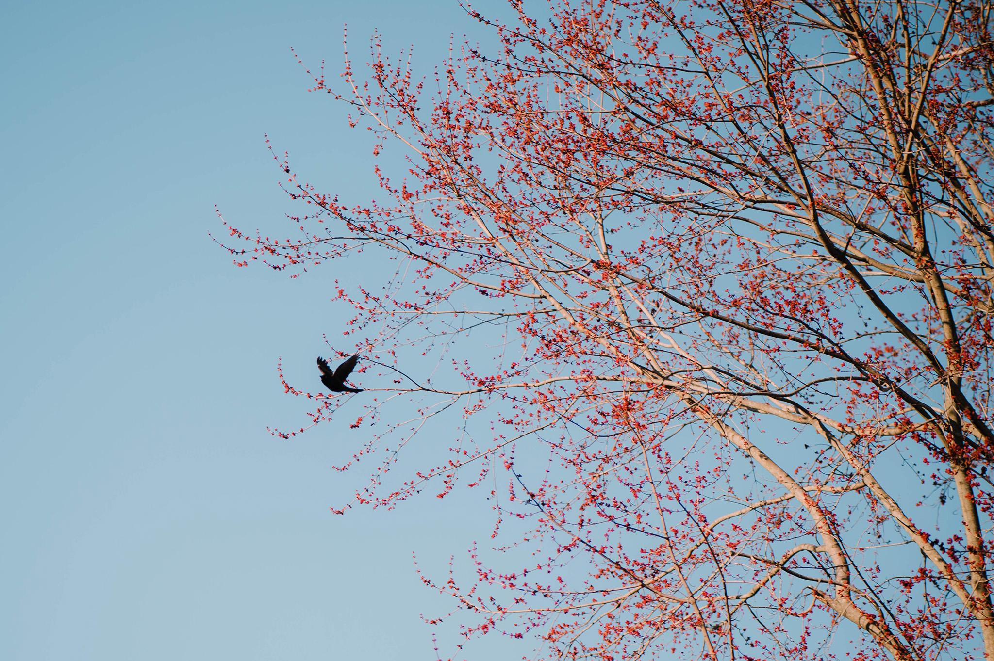 April 5: Sights of spring.