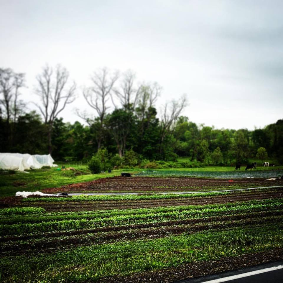 farm in the spring.jpg
