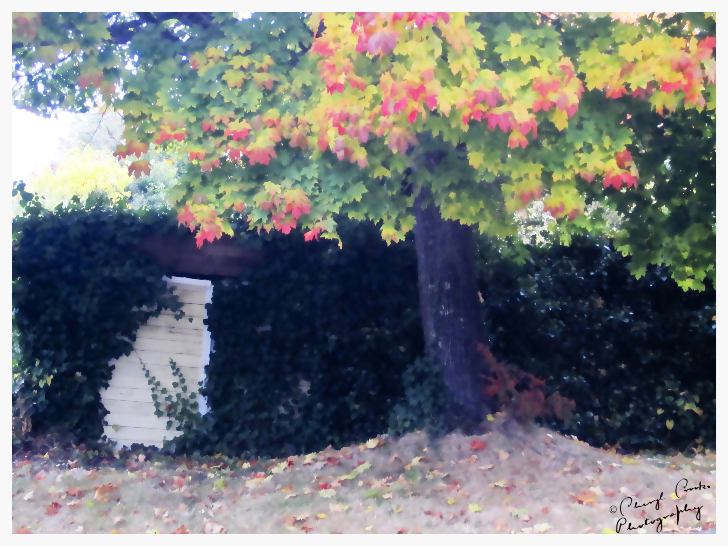 Autumn Gate Pastel