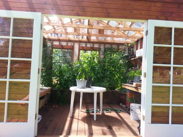 greenhouse tomato bed