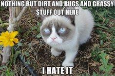 I like Grumpy Cat.