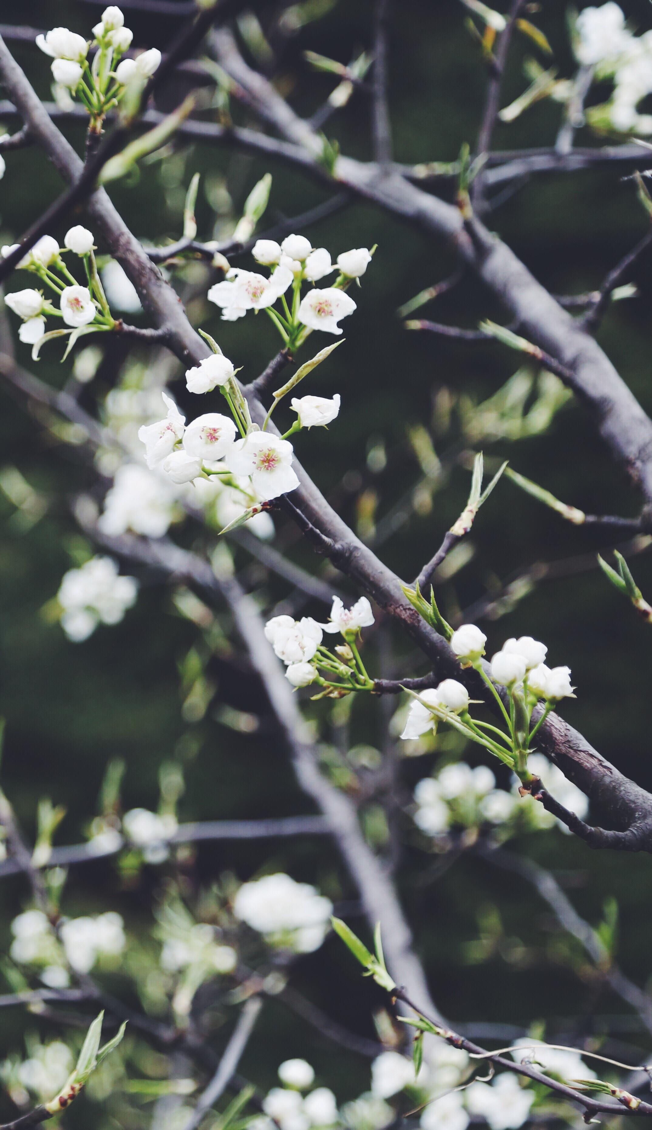 macro white flowers.jpg