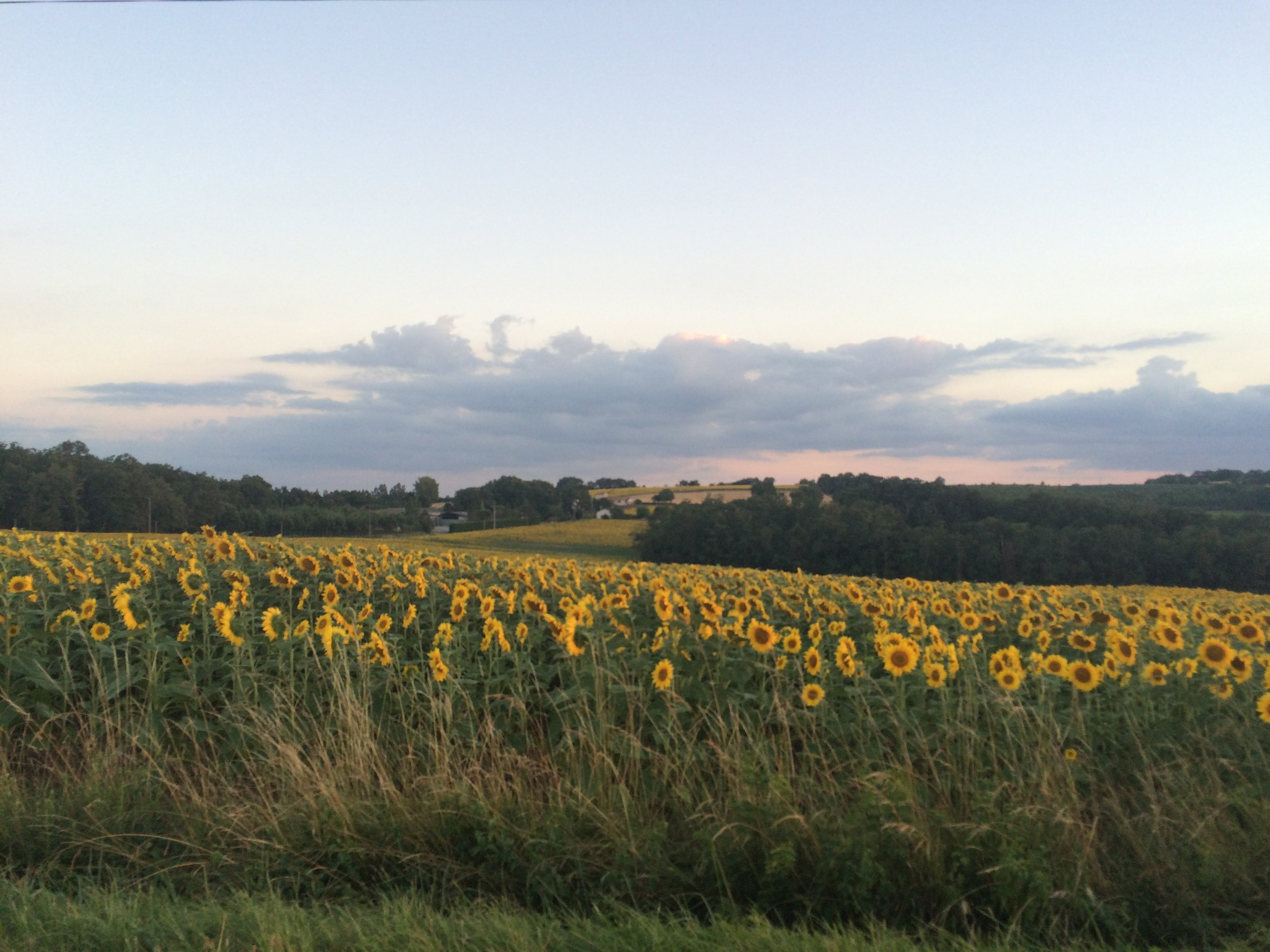 Just outside Nérac, Southwest France, on a warm July evening.