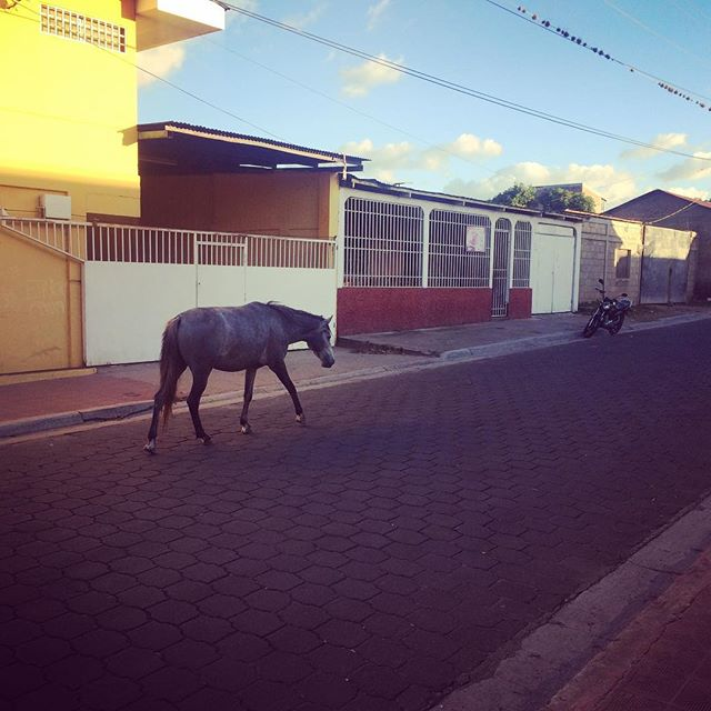 The loneliest horse in Estelí