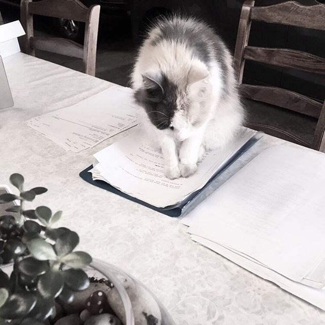 When you try and be productive.. 😼kitty wants to read the script too . . . . .  #cats_of_instagram #catstagram #cutecat #instacat #catlove #kitten #meow #katze #catlover #catwalk #catoftheday #cat_features #cats_of_instagram #catstagram #cutecat #instacat #catlove #kitten #meow #katze #catlover #catwalk #catoftheday #cat_features